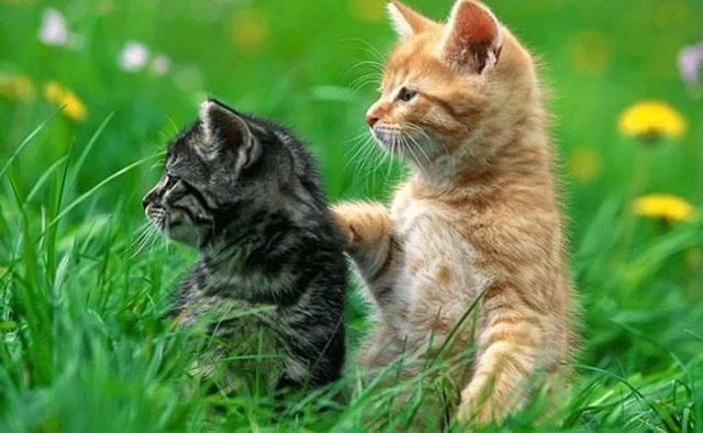 Nằm mơ thấy mèo đánh số mấy
